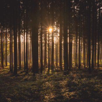 Bespaar 0,2 Mton CO₂ met duurzamer bosbeheer